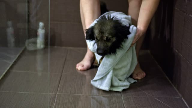 woman wiped a dog with towel - towel stock videos & royalty-free footage
