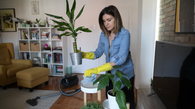 woman wiping dust from furniture and plants - washing up glove stock videos & royalty-free footage