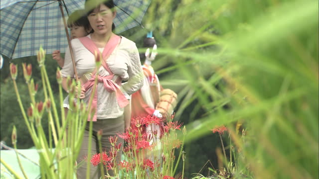 a woman with a small child on her back crouches down to admire spider lilies. - 日用品点の映像素材/bロール