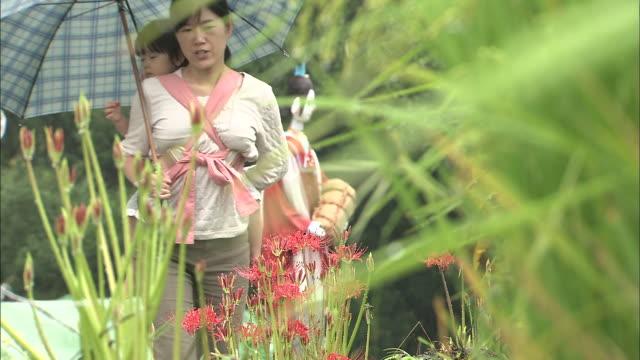vídeos y material grabado en eventos de stock de a woman with a small child on her back crouches down to admire spider lilies. - hymenocallis caribaea