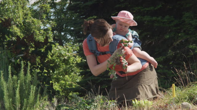 ms woman with baby planting on green roof / seattle, washington, usa - huckepack nehmen stock-videos und b-roll-filmmaterial