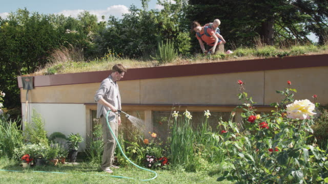 vidéos et rushes de ws woman with baby planting on green roof while man waters plants in garden below / seattle, washington, usa - parterre de fleurs