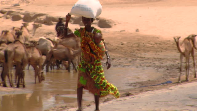 ms ts woman with baby walks past camels / todonwang, turkana, kenya - 運ぶ点の映像素材/bロール
