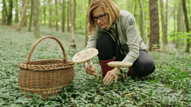 ms woman with basket harvesting mushrooms in forest. umbrella - foraging stock videos & royalty-free footage