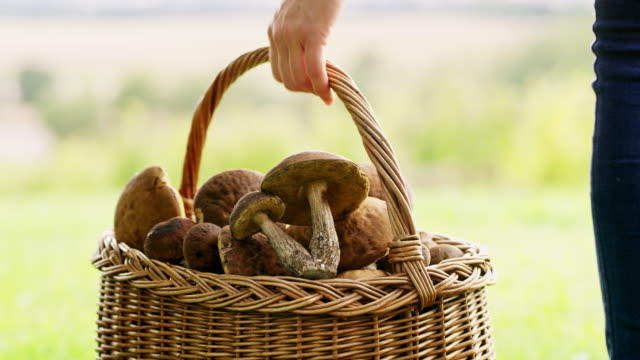 cu woman with basket harvesting mushrooms - picking mushrooms stock videos and b-roll footage