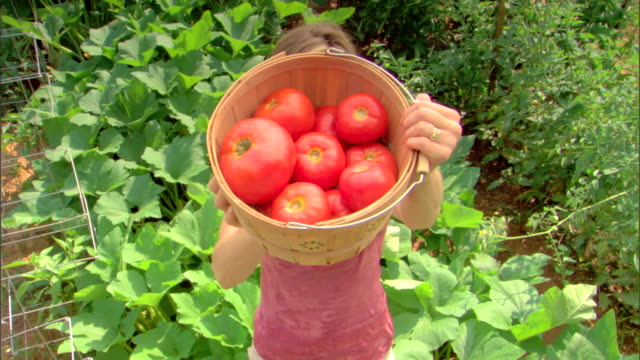 woman with basket of tomatoes - see other clips from this shoot 1425 stock videos and b-roll footage