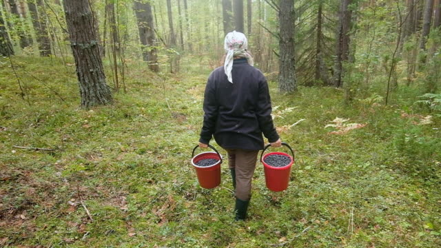 woman with buckets with berries - only mature women stock videos & royalty-free footage