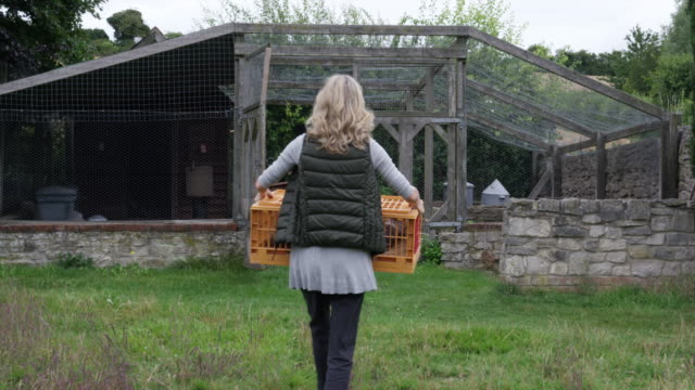 woman with cage with chickens - chicken coop stock videos & royalty-free footage