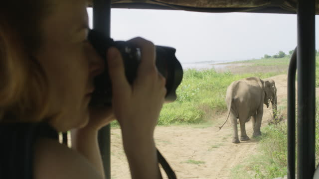 ms woman with camera photographing elephant from safari vehicle,sri lanka - photographer stock videos & royalty-free footage