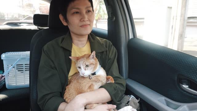 vidéos et rushes de femme avec le chat dans la voiture - one animal