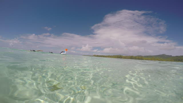 woman with children snorkeling under the sea - huahine island stock videos and b-roll footage