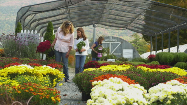 ws woman with daughter (8-9) walking through greenhouse holding potted plants , manchester, vermont, usa - garden center stock videos and b-roll footage