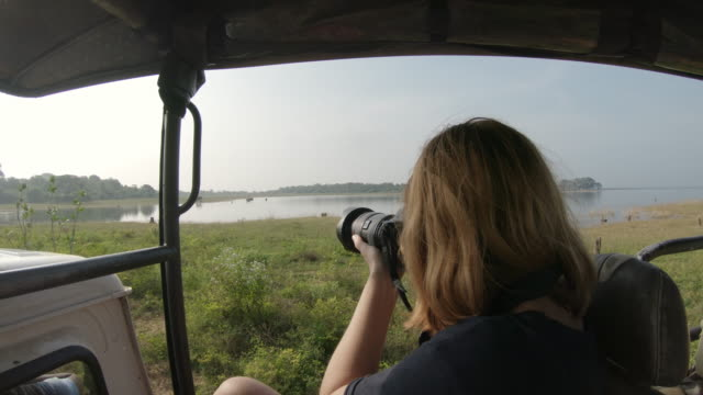 ms woman with digital camera photographing wildlife from safari vehicle,sri lanka - photographing stock videos & royalty-free footage
