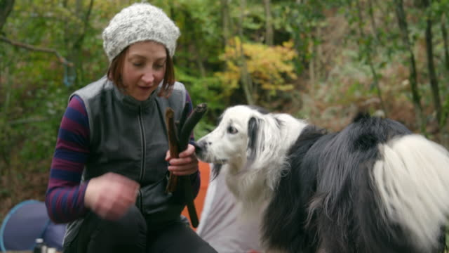 woman with dog camping - log stock videos & royalty-free footage