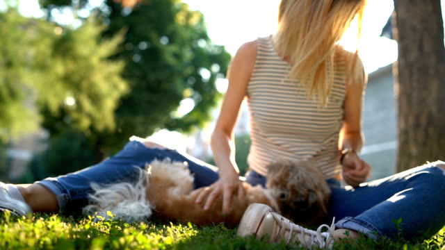 woman with dog in a park - cagnolino da salotto video stock e b–roll