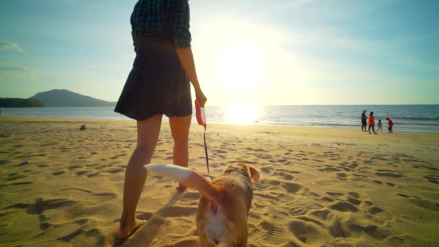 woman with dog on the beach slow motion - beagle stock videos & royalty-free footage