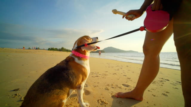 woman with dog on the beach - collar stock videos and b-roll footage