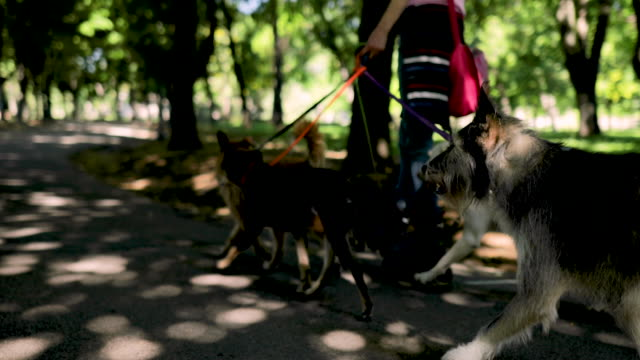 woman with group of adopted dogs rides roller skates in park - dog walking stock videos & royalty-free footage