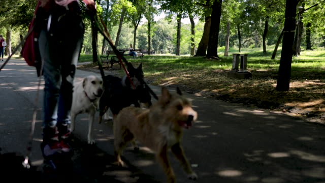 woman with group of adopted dogs rides roller skates in park - footwear stock videos & royalty-free footage