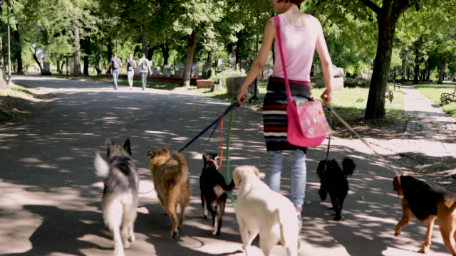 woman with group of adopted dogs rides roller skates in park - responsibility stock videos & royalty-free footage