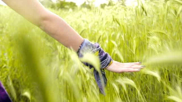 donna con mano nella brezza d'estate - avambraccio video stock e b–roll