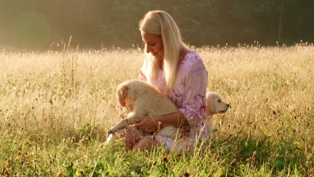 ms woman with puppies in meadow - two animals stock videos & royalty-free footage