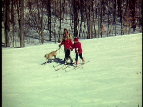 1975 ws woman with two daughters (12-13, 14-15) and dog cross-country skiing, ripton, vermont, usa - anno 1975 video stock e b–roll