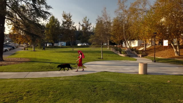 woman with umbrella walking dog in park- aerial drone shot - curve stock videos & royalty-free footage