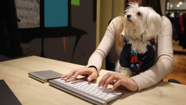 woman working and enjoying time together with her cute maltese dog at pet friendly office - cagnolino da salotto video stock e b–roll
