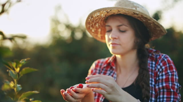 woman working in cherry plant on a warm and sunny summer morning - orchard stock videos & royalty-free footage