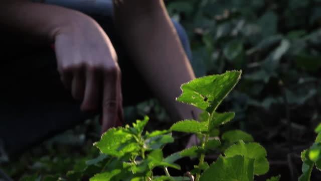 ms woman working in garden - solo una donna di età media video stock e b–roll