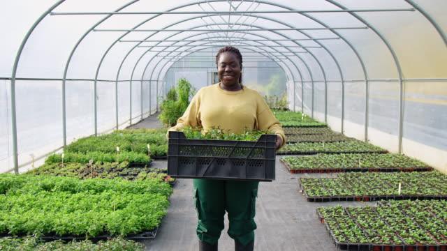 frau arbeitet in pflanzengärtnerei - schwarz stock-videos und b-roll-filmmaterial