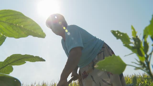 hd: woman working in the field - plowed field stock videos & royalty-free footage