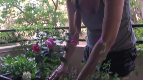woman working soil around flowers in her urban balcony garden window box - window box stock videos & royalty-free footage