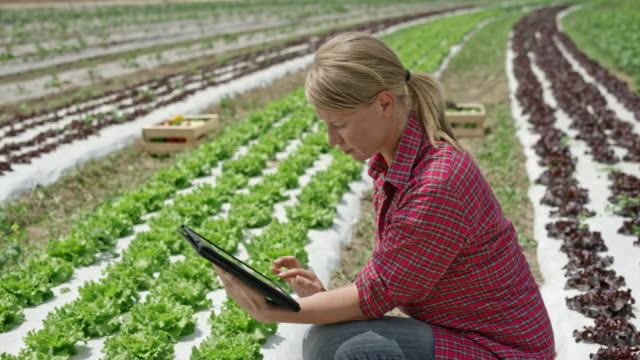 vídeos de stock e filmes b-roll de woman working with the use of a digital tablet in the lettuce field - agricultura