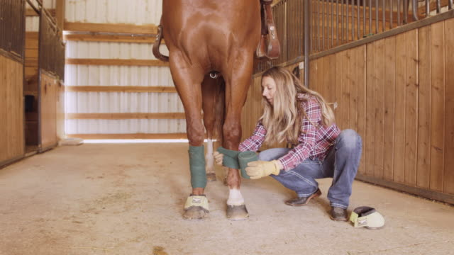 woman wrapping horses ankles with protective material - jockey stock videos and b-roll footage
