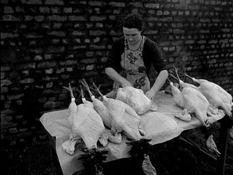 a woman wraps up a plucked turkey ready to be sold at a turkey farm in wales 1954 - cellophane stock videos and b-roll footage