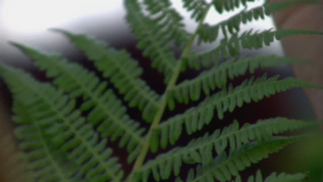 stockvideo's en b-roll-footage met woman's hand examining leaf - kelly mason videos