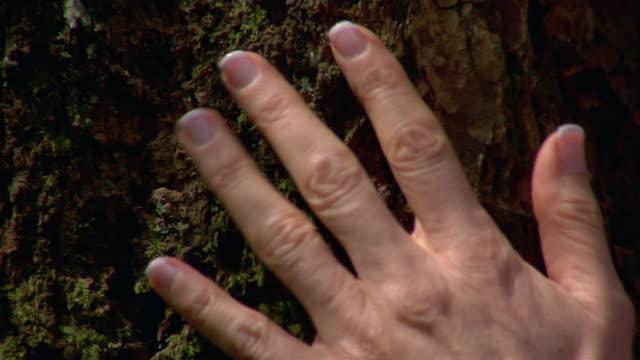 vídeos de stock, filmes e b-roll de woman's hand feeling bark on tree trunk - percepção sensorial