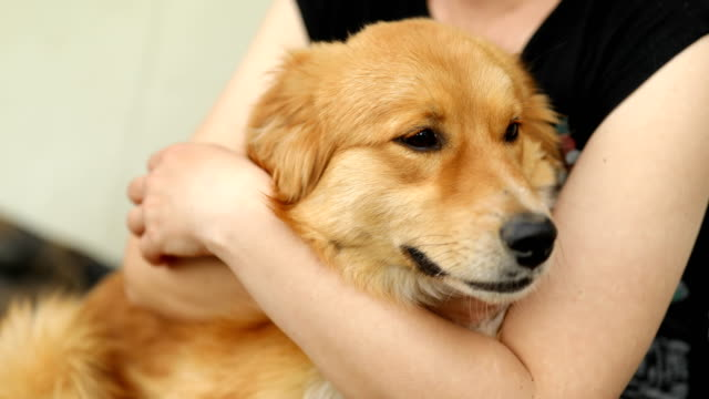 woman's hand stroking cute dog - pet owner stock videos & royalty-free footage