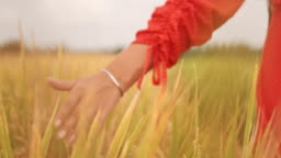Woman's hand touch young wheat ears at sunset or sunrise. Rural and natural scenery. country, nature, summer holidays, agriculture and people concept - close up of young woman hand touching field