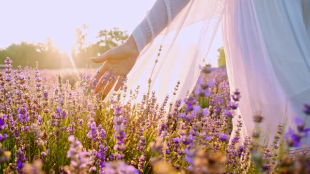 slo mo woman's hand touching lavender flowers - bouquet stock videos & royalty-free footage