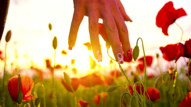 CU DS Woman's Hand Touching Poppy Flowers