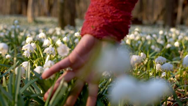 vidéos et rushes de slo missouri femme main toucher snowdrops - parterre de fleurs