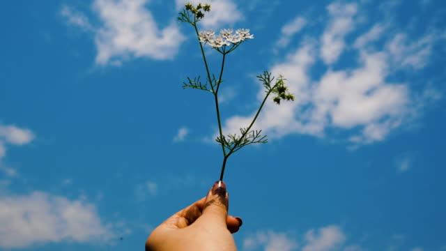 Main de femme tout en portant des fleurs blanches avec un ciel bleu et nuageux
