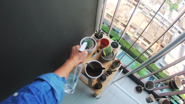 pov-woman's hand while watering cactus at her terrace-modern living - flowering cactus stock videos & royalty-free footage