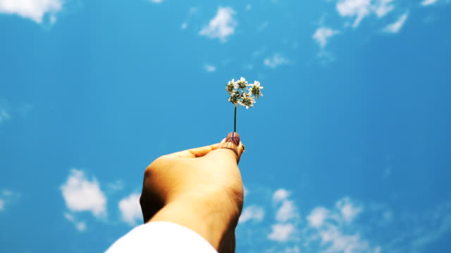 Woman's hand with white shirt is carrying small flower beside the sunny and blue sky -hipster with leisure expression
