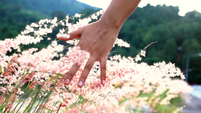 slo mo woman's hands touching flower - bouquet stock videos and b-roll footage