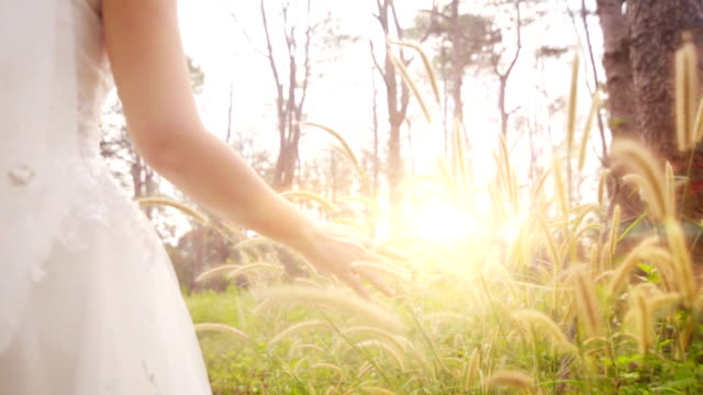 slo mo woman's hands touching grass flower at sunset. - bride stock videos and b-roll footage