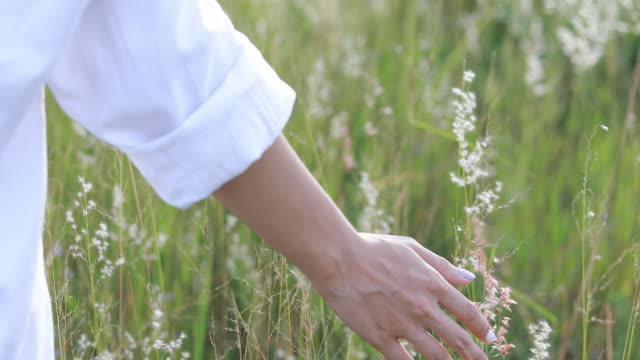 woman's hands touching grass flower at sunset - purity stock videos & royalty-free footage